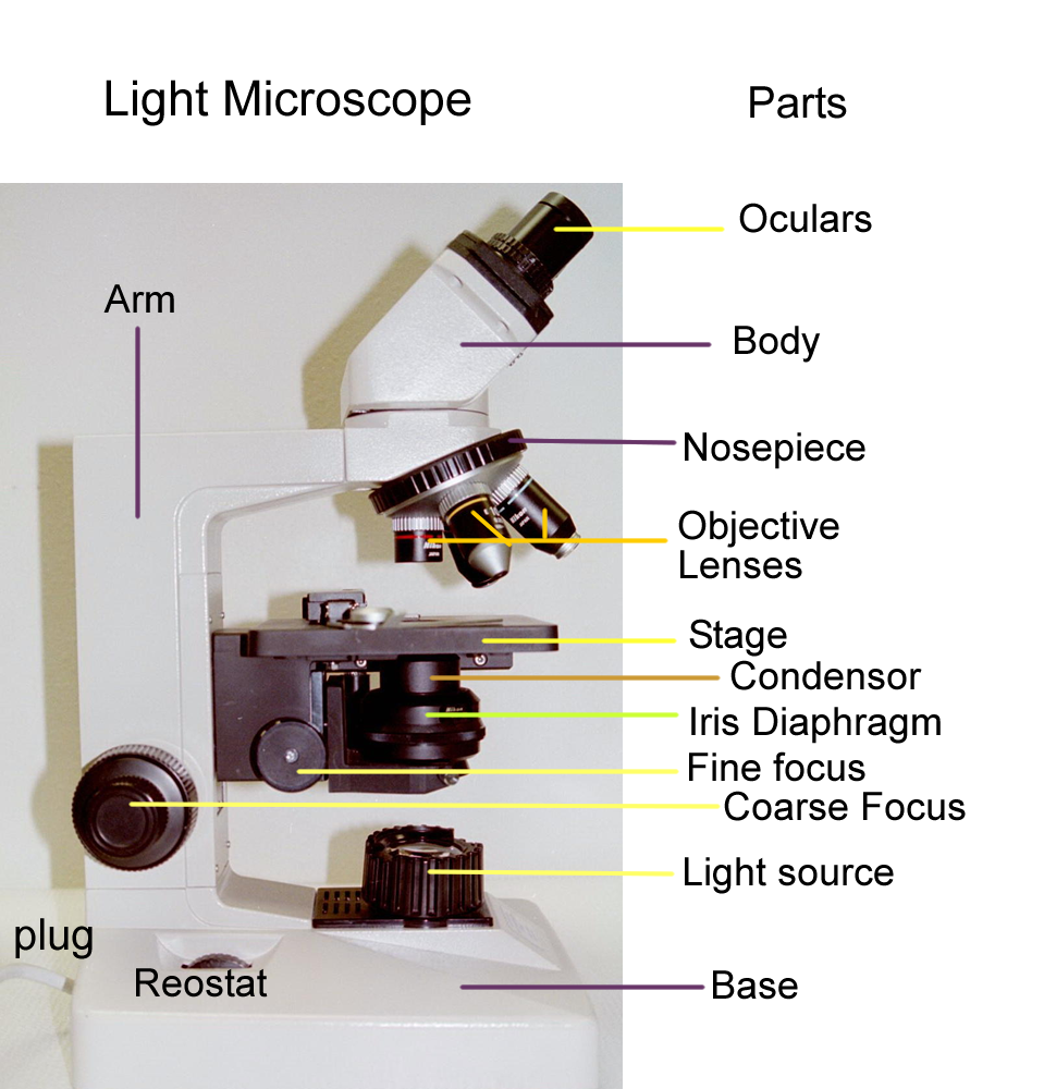 Lab exercise link page microscopy ccuart Gallery