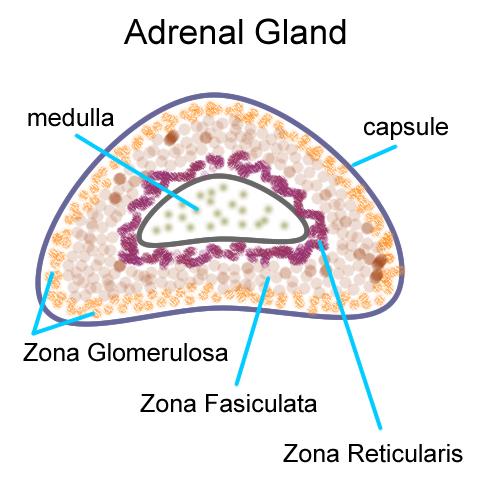 Biology 2404 Ap Basics