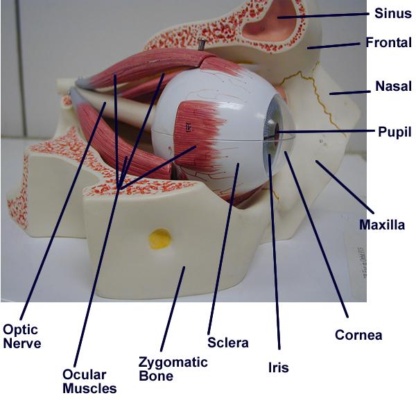 Biology2404 Ap Basics