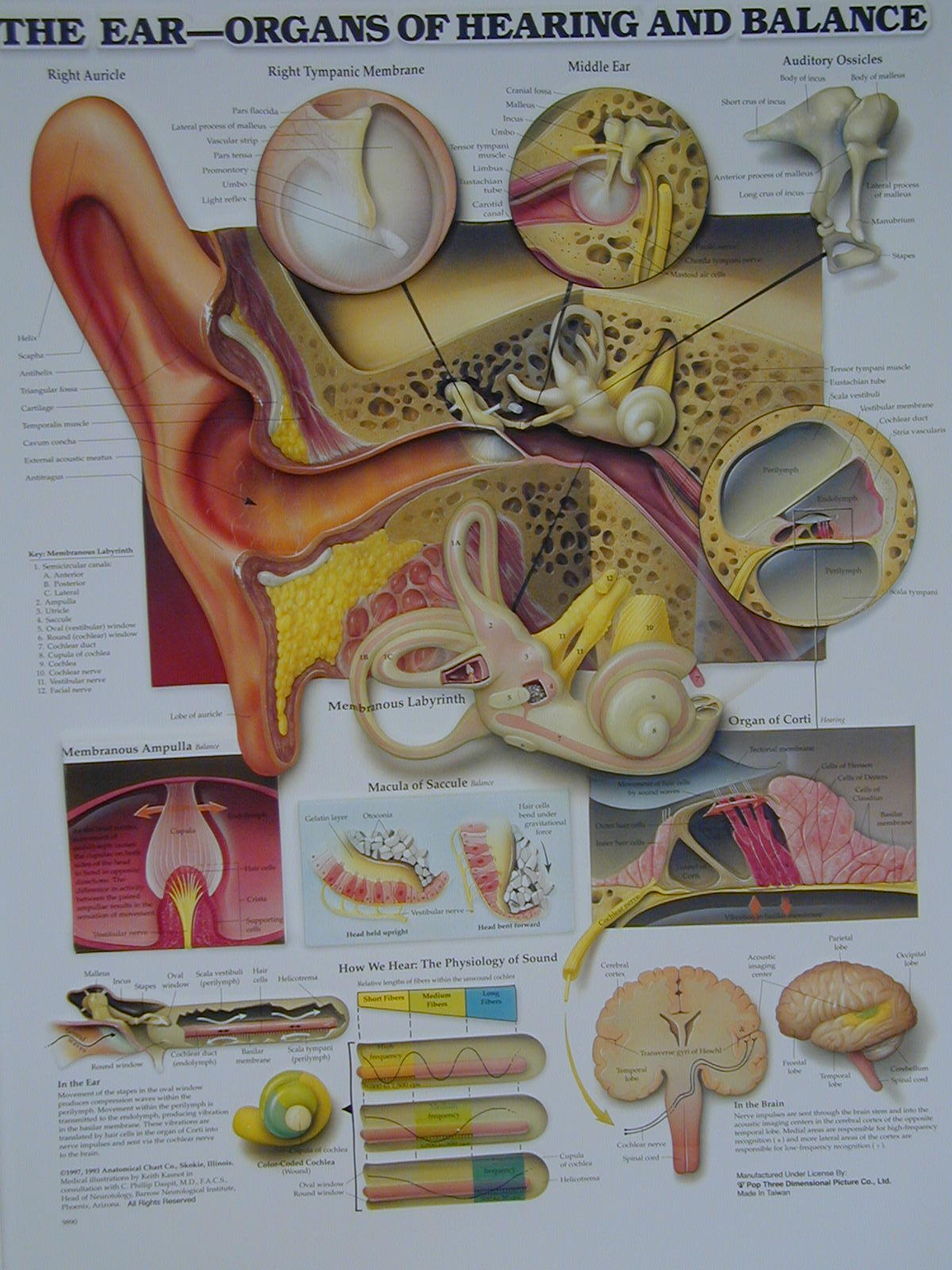 Biology2404 A&P Basics